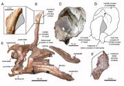 Tsintaosaurus skull.png