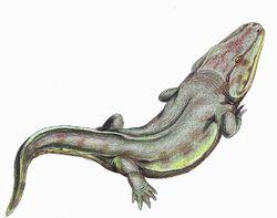 Rhinesuchus whaitsi.jpg