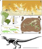 Skeletal reconstruction of Gnathovorax.png