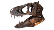 Tyrannosaurus TE-73..png
