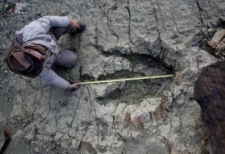 Paleontologist Sebastian Apesteguia measures the footprint made by a meat-eating predator some 80 million years ago and one of the largest of its kind ever found, at the Maragua Syncline, Bolivia, July 21, 2016.jpg