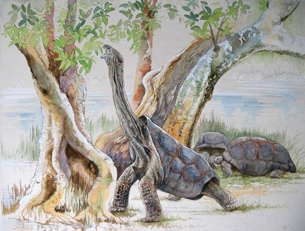 Гигантская черепаха Восмера