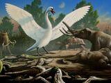 Лебедь Фальконера