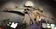 Hesperosaurus fossil.jpg