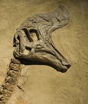 Lambeosaurus skull 03.jpg