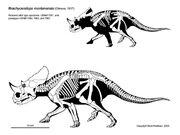 Brachyceratops-scott-hartman.jpg