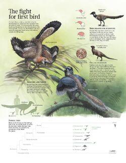 Bird origins.jpg