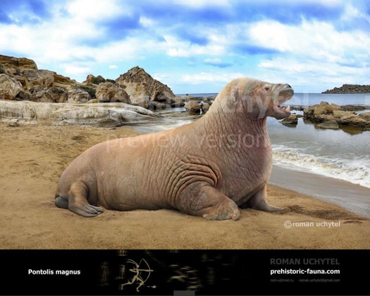 Гигантский морж