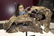 Proa valdearinnoensis skull 01.jpg