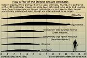 Giant-prehistoric-snakes.jpg