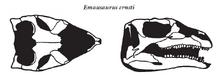 Эмаузавр череп.png