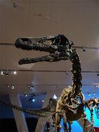Avstroraptor-Austroraptor