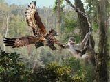 Мадагаскарский венценосный орёл