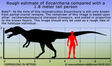 Eocarcharia-size.jpg