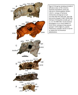 Arbour etal 2014 Mongolian ankylosaurs.jpg