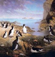 340px-Pinguinus.jpg