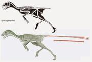Epidexipteryx skeleton.jpg