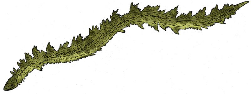 Адриозавр