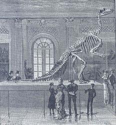 Montagem nature iguanodon coppy1, 1883