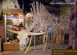 Скелет Зубра.jpg