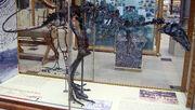 Eustreptospondylus fossil.jpg