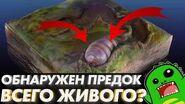 Предок всего живого? Кембрийский взрыв и Урбилатерия Эдиакар и Икария-0