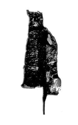 Dicranograptus spinifer 1.jpg