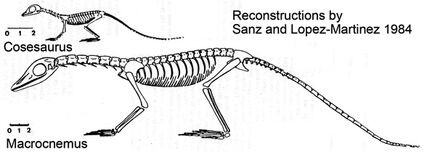 Sanz-cosesaurus72-588.jpg