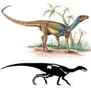 Пизанозавр5.jpg