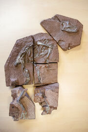 Heterodontosaurus 2005.jpg