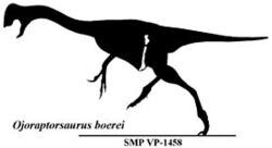 Ojoraptorsaurus boerei.jpg