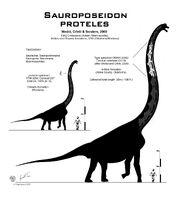 Sauroposeidon proteles.jpg