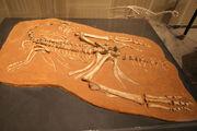 Ingenia fossil.jpg