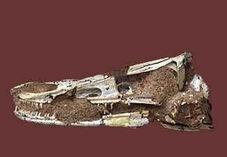 Olc 046 byronosaurus jaffei front.jpg