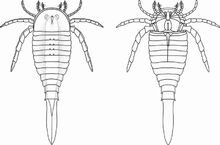 800px-Drepanopterus abonensis by ansuz urisyr.jpg