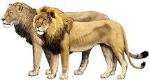 Panthera-leo-2