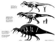 Theropod size.jpg