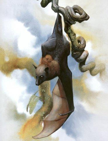 Палаанская летучая лисица