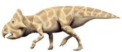 Leptoceratops cs a96a.jpg