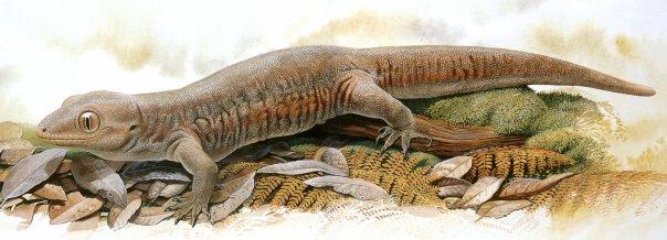 Гигантский новозеландский геккон