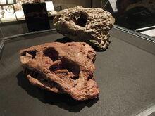 Dinosaurium, Deltavjatia vjatkensis.jpg