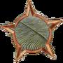 Дикинсония