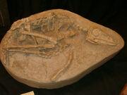 Sinovenator fossil 01.jpg