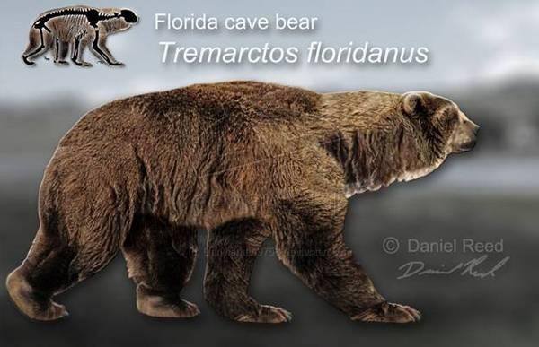 Tremarctos floridanus.jpg