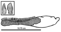250px-Eshanosaurus IVPP V11579.png