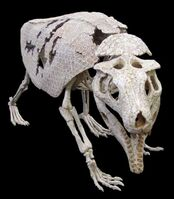 Armadillo-crocodil
