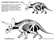 Triceratops raymond.jpg
