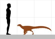 220px-Ornitholestes size.png