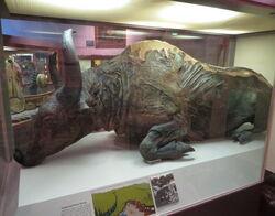 Steppe bison mummy.jpg