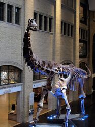 Futalognkosaurus by kmourzenko-d6bjwj0 776a